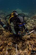 Reef Check 2014 - Cliquer pour agrandir