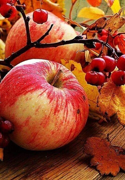Belles pommes
