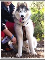 Laïcko (17,5 mois)