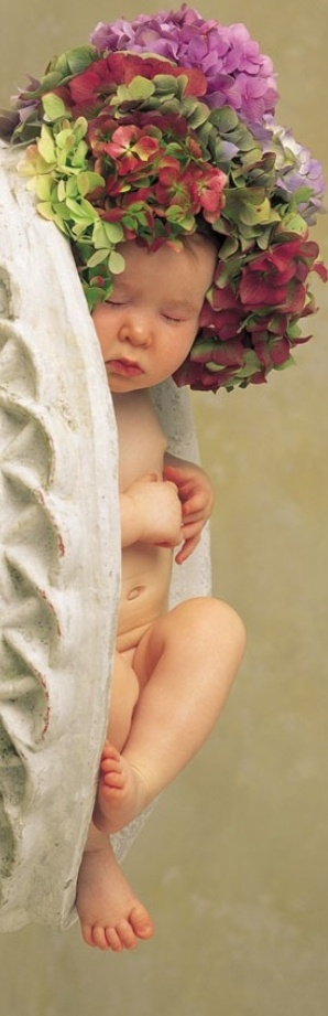 Photographies Anne Geddes