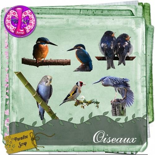 Oiseaux divers