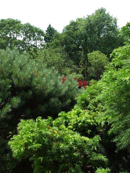 Toulouse-pont-japonais-arbre