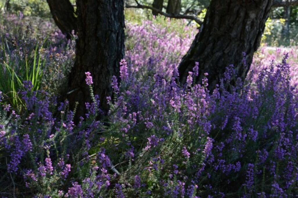 Fleurs-13-1443.jpg