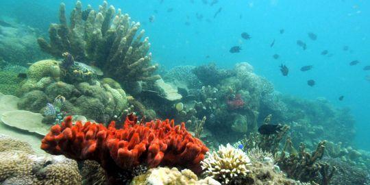 coraux.jpg
