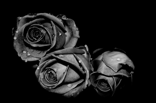 wallpapers ROSES