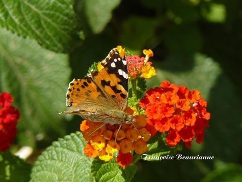 Galerie - Paradis des papillons