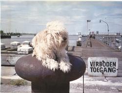 Le chien Pixi de Haren (Bruxelles) à rejoint J.C. Brialy dans les étoiles
