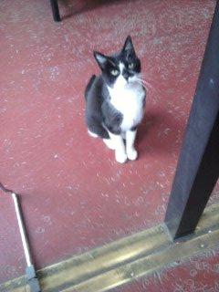 Vanille, le chat de la B.U