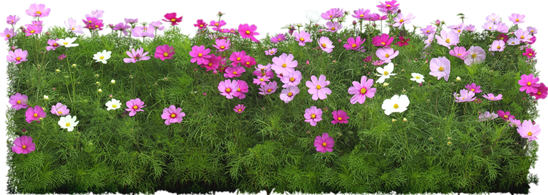 Flowers in the Garden 49.png