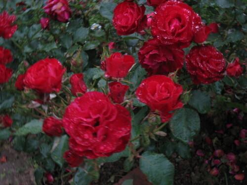 Fleurs-026.jpg