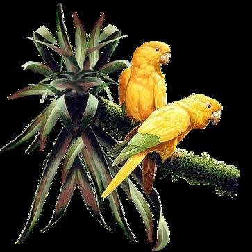 Oiseaux,perroquet