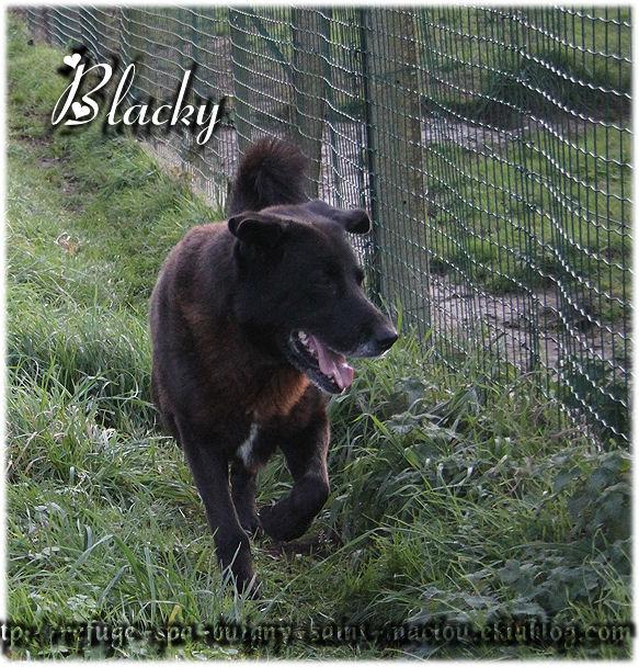 Photos du 06/12/12 - Blacky,