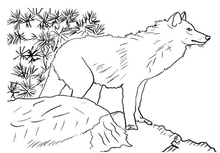Dessin du loup et l agneau colorier les enfants - Dessin du loup ...