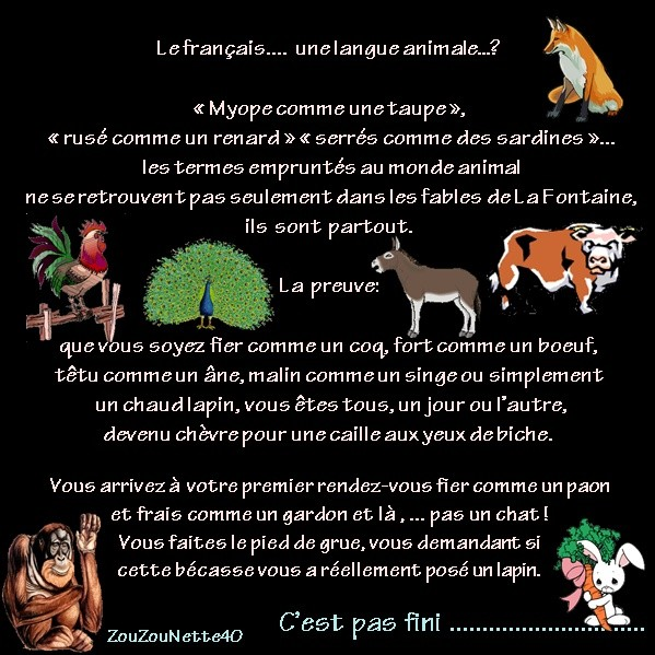 EXPRESSIONS-ANIMALES-N--1-jusqu-a-lapin-.jpg