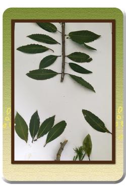 L'arbre dans la nature