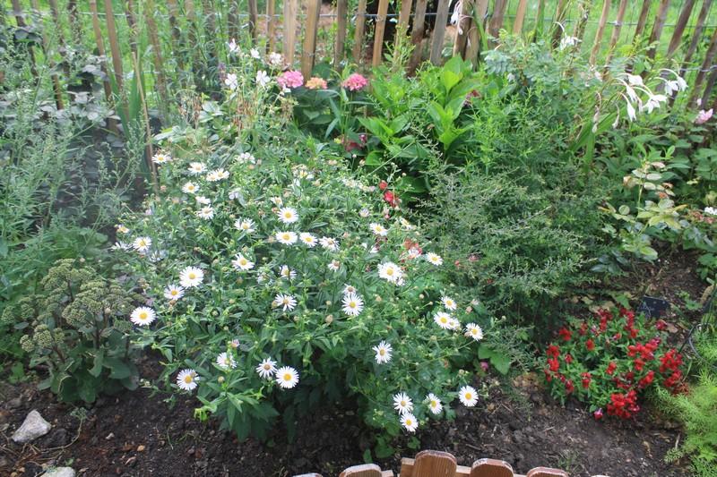 Les floraisons en ce début du mois d'août