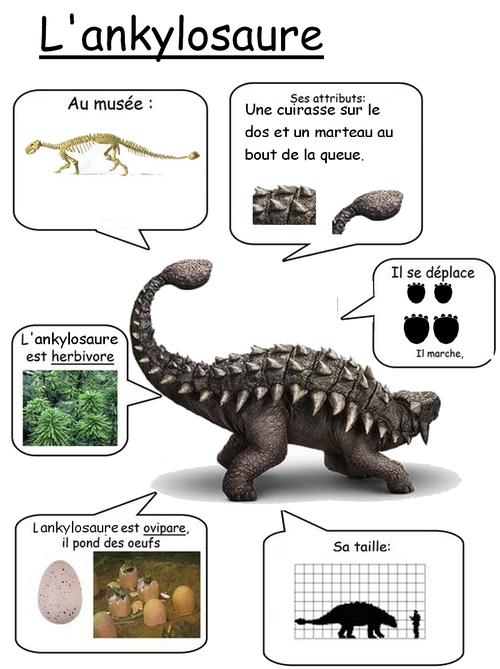 Fiche reference sur l'ankylosaure