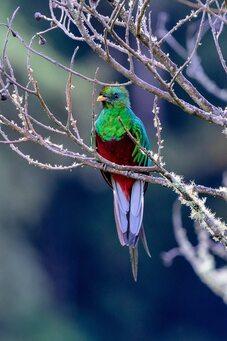 Le Quetzal, un oiseau sacré