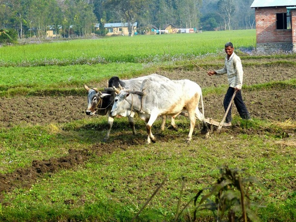 scènes de vie à la campagne