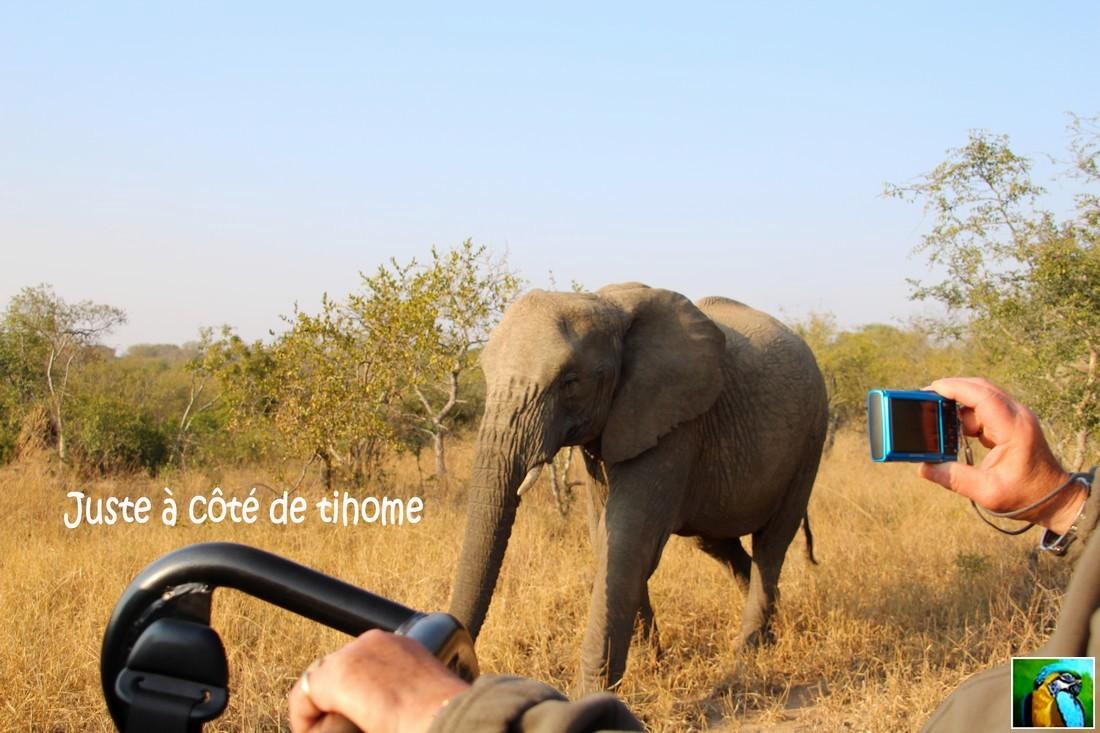 Afrique du Sud : juin 2018 Sur la trace d'éléphants 1/4