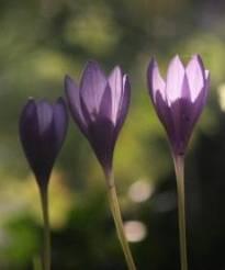 p'tite fleur b