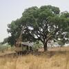 370 Burkina  Midi avant Banfora