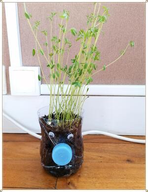 Tuto : Des pots à graines