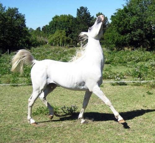 ma passion les chevaux