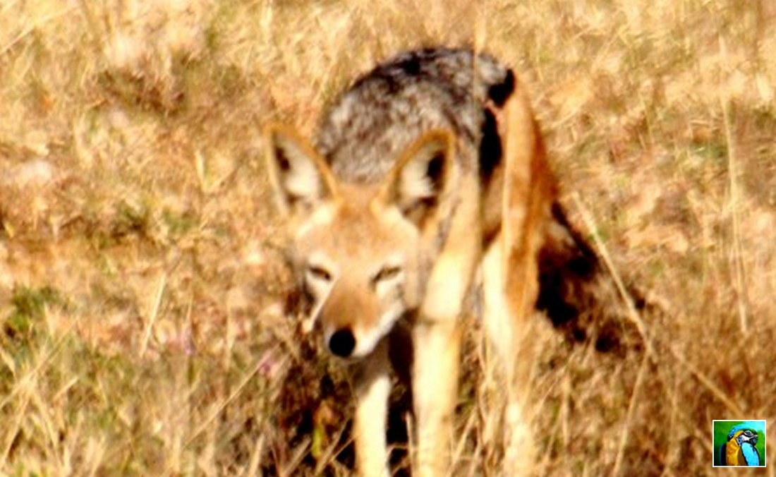 Afrique du Sud : Juin 2018 : suite du Safari 2/3