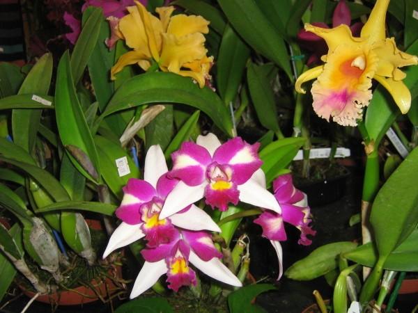 fleurs-en-alsace-7244.JPG