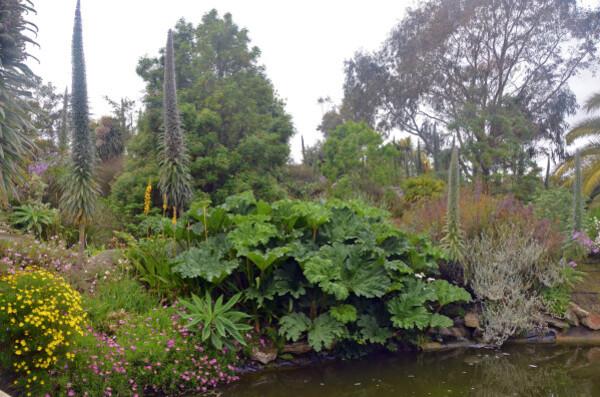 50 Jardin exotique