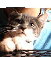 kitty vous écrit un mot
