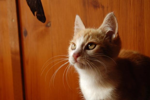 chaton24juilletp