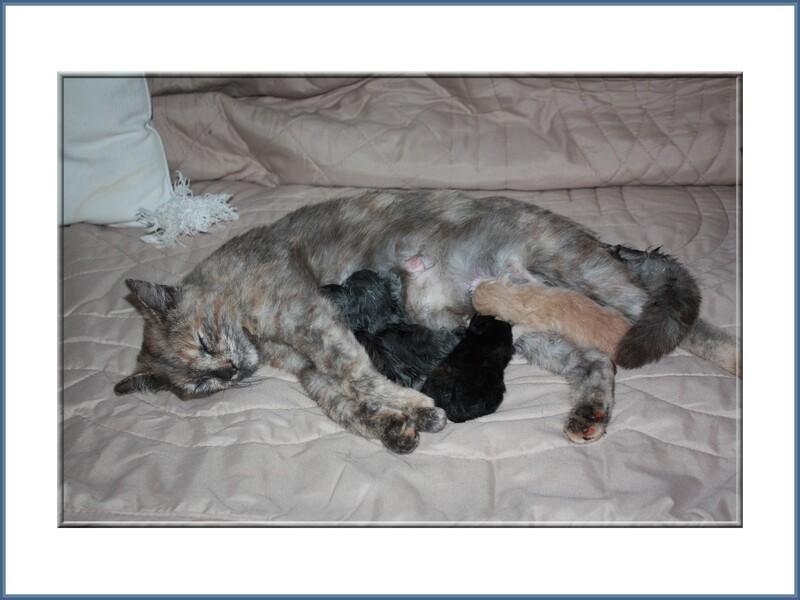 Juin 2014, naissance des chatons