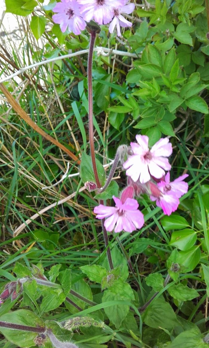 Pêle -mêle   fleuri