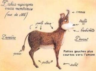 Un animal des montagnes, et principalement des Alpes.
