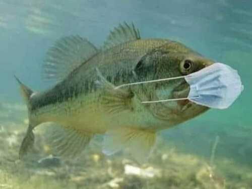 Aujourd'hui, journée poisson... covid