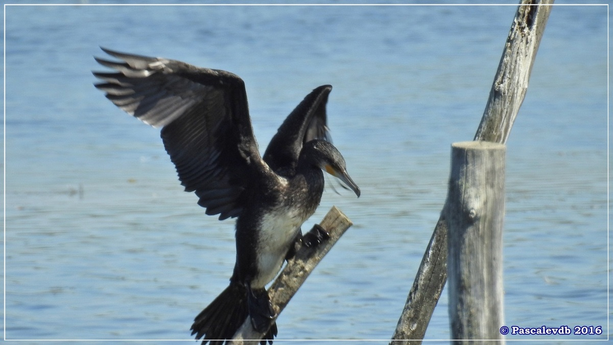 Réserve ornitho du Teich - Août 2016 - 5/12