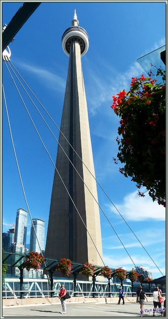 Balade le nez en l'air - Toronto - Ontario - Canada