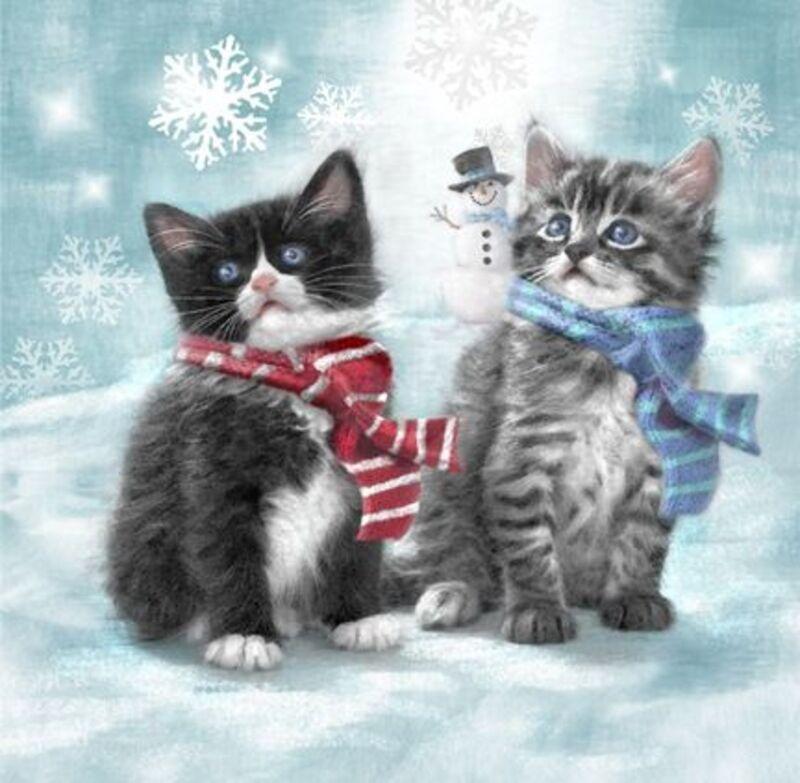 Chats de Noel