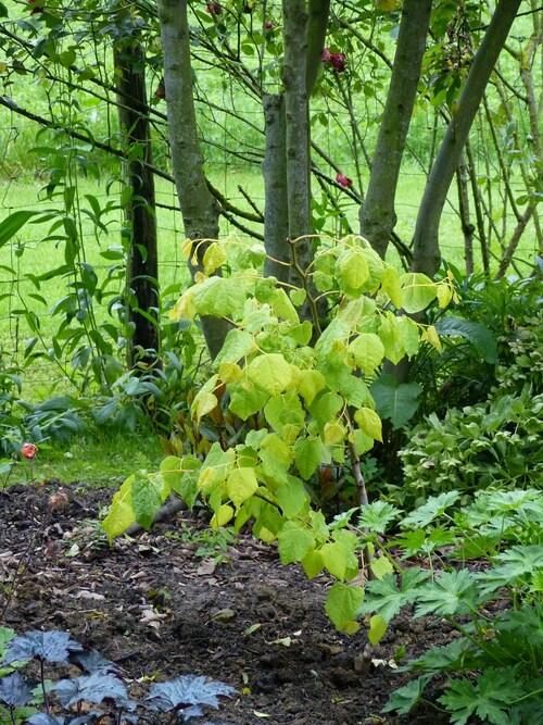 nouveaux arbres et arbustes