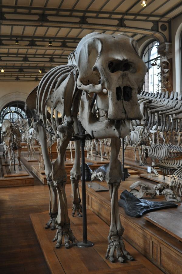 Journée au Muséum d'Histoire Naturelle à Paris
