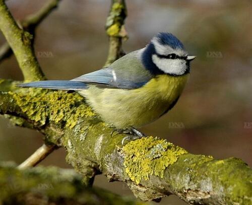 Un bel oiseau .