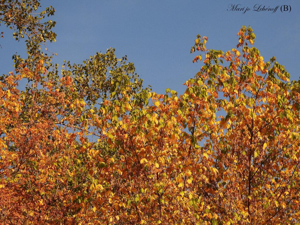 Ah! Le bel automne