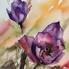 tulipes rectifié [640x480]