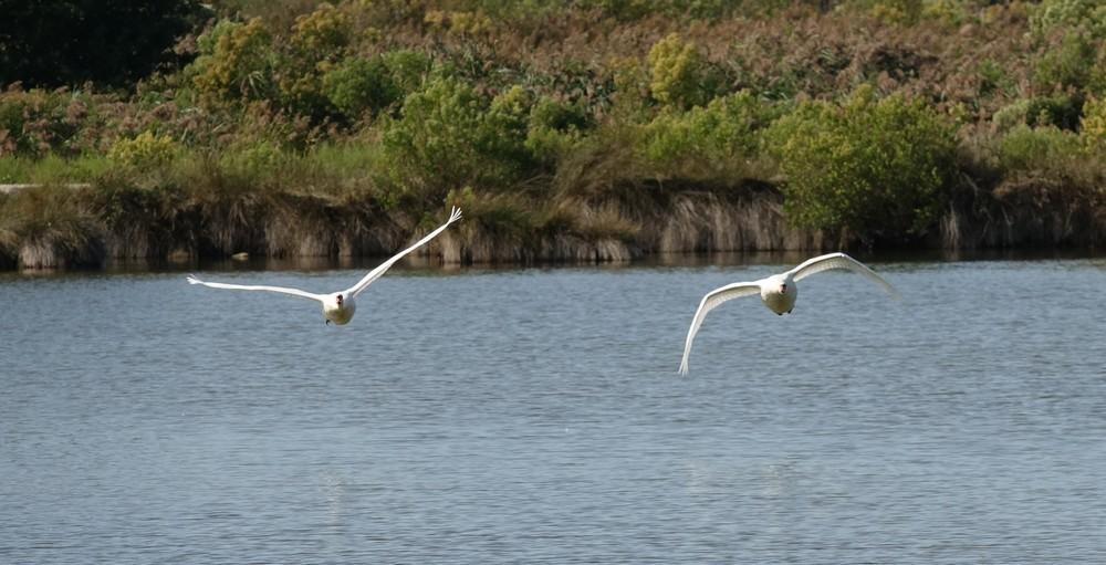 Divers oiseaux d'automne, au Domaine de Certes et Graveyron...