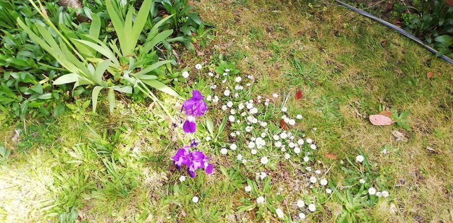 notre petit tour au jardinet de maman l'après midi pour prendre le soleil