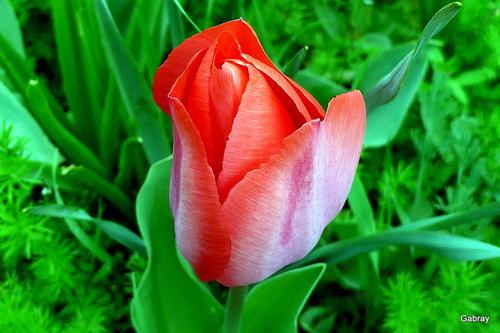 Printemps au jardin: des fleurs ...