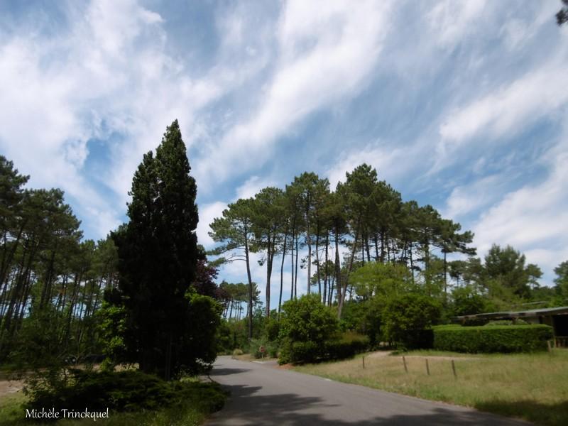 Une balade à l'Etang du Paludot à LEON (40), le 24 mai (suite)....