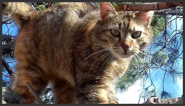 L'herbe à chat : un complément indispensable à sa santé